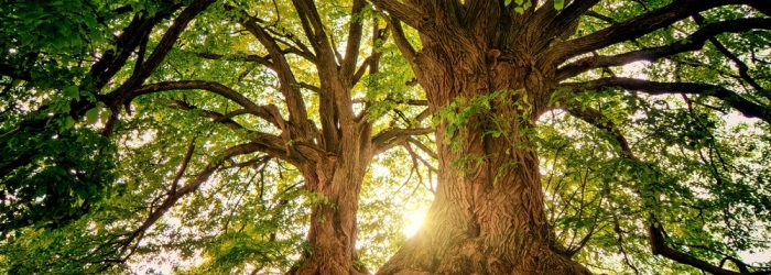 Det är dags att fixa träden!
